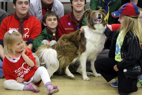 BORIS MINKEVICH / WINNIPEG FREE PRESS LOCAL STDUP - Yume the rescue dog shows some love to some some Scouts attending the event. There was a dog show put on by Hull's Haven Border Collie Rescue. left is Genevieve Evan,4, and right her brother Julian,6.  From press release:  Winnipeg Scouts Pamper Rescue Dogs, Creating Food Dispensing Games, Handmade Beds and Treats During Good Turn Week, April 22 – May 1. Scouts Canada is challenging all Canadians to join them in performing a Good Turn as part of a national movement to spread goodwill during Good Turn Week, April 22 – May 1, 2016. A Good Turn doesn't have to be a grand gesture; it can be as simple as helping a neighbour unload their groceries or helping someone who is short of change at the store checkout. Scouts from across Winnipeg are collecting donations of towels, blankets, toys, dog food and other pet supplies for Hull's Haven Border Collie Rescue. The Scouts are also building fun food dispersing games, making handmade dog beds and creating homemade treats for the rescue dogs awaiting new homes.  Photo taken at Transcona Scout Hall. April 28, 2016