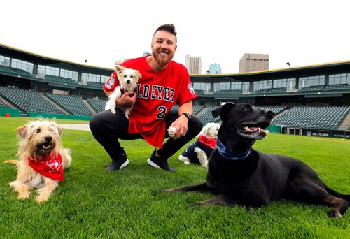 BORIS MINKEVICH / WINNIPEG FREE PRESS Goldeyes at Shaw Park on Saturday are hosting the Bark in the Park game, wherein they are hoping to set a world record for the most dogs at a sporting event. Goldeyes pitcher Edwin Carl holds his dog named Snooks poses for a photo with, from left, Dasi, Bogey, and Rue. June 15, 2017
