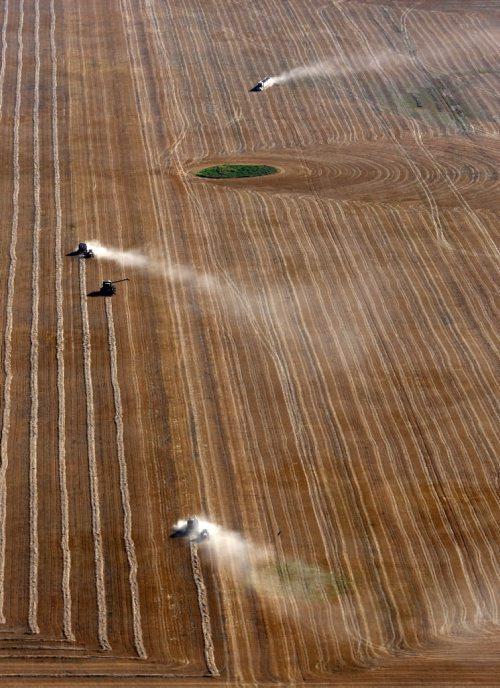 Brandon Sun  03102008 Combines and grain trucks kick up trails of dust as they work a field. (Tim Smith/Brandon Sun)