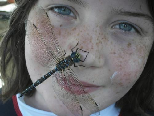 Carolyn Kavanagh(10) had this large dragonfly land on her while spending time at Winnetka Lake, Ontario. photo by Andrea Kavanagh (mom0 show us your summer winnipeg free pr