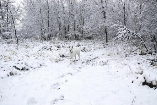 find waldo's fido  Thought you might like this weather shot.Spirit,  a white German Shepard, disappears in the snow in Selkirk Park inthe City of Selkirk.CheersShirley Muir - for winnipeg free press