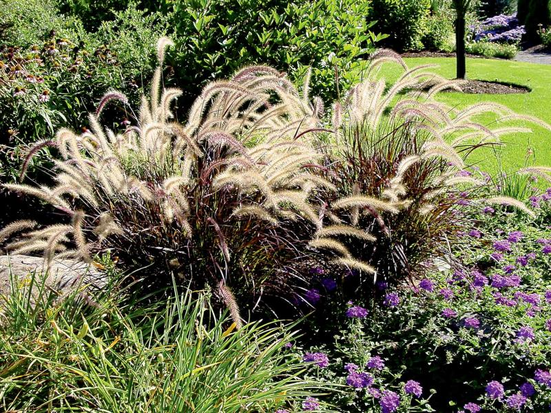 High On Ornamental Grass Winnipeg Free Press Homes