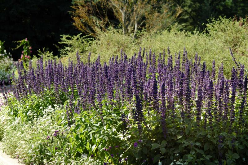 <p>Provide a range of flowers from fall to spring. To the hummingbird, a swath of purple salvia is a field of dreams.</p>
