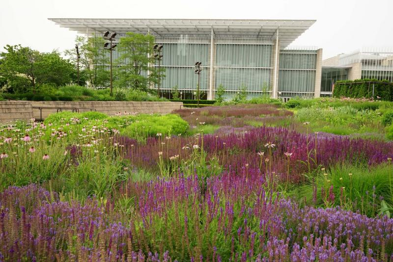 <p>Designed by Piet Oudolf, the famed Lurie Garden in Chicago is a combination of native and introduced perennials and grasses.</p><p>Supplied / Piet Oudolf</p>