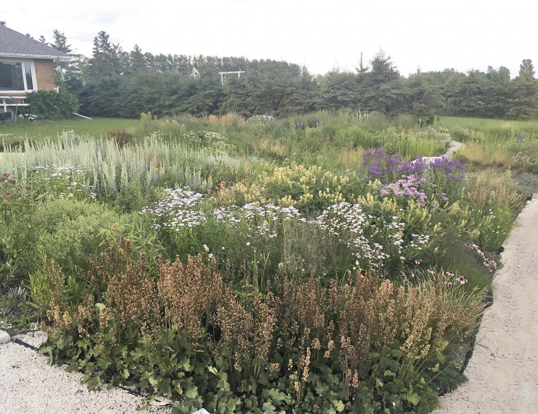 <p>Prairie Flora</p><p>Drifts of native plants flourish on this turf-free residential boulevard.</p>