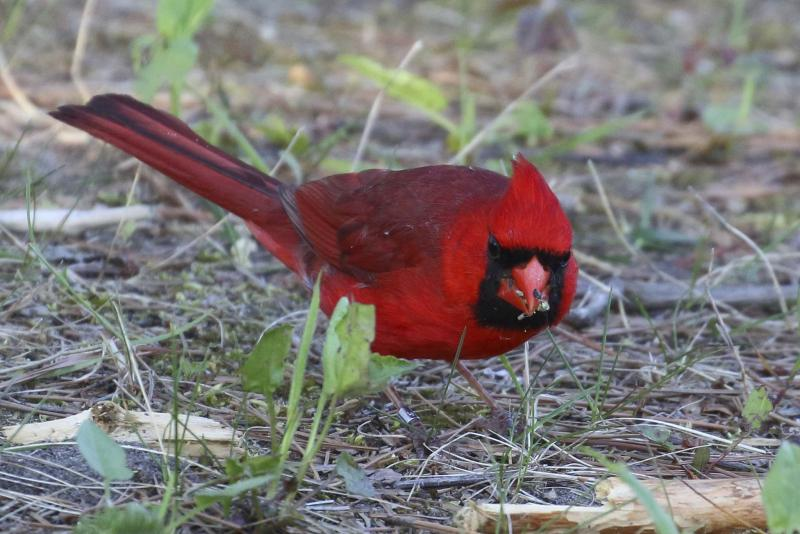 Online atlas aimed at bird enthusiasts - Winnipeg Free Press