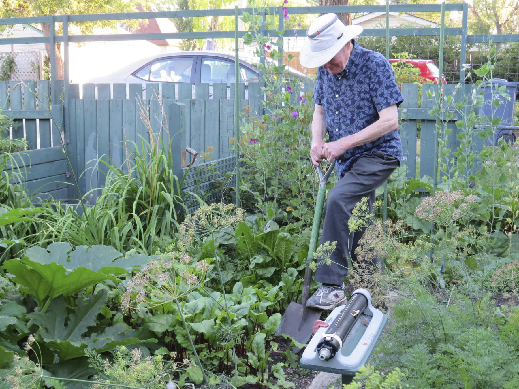 <p>Colleen Zacharias / Winnipeg Free Press</p><p>Bill Linton, 87, says gardening keeps him feeling young.</p>