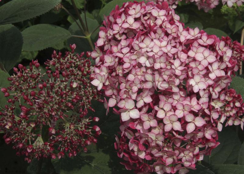 Flaunting flowers well into fall - Winnipeg Free Press Homes