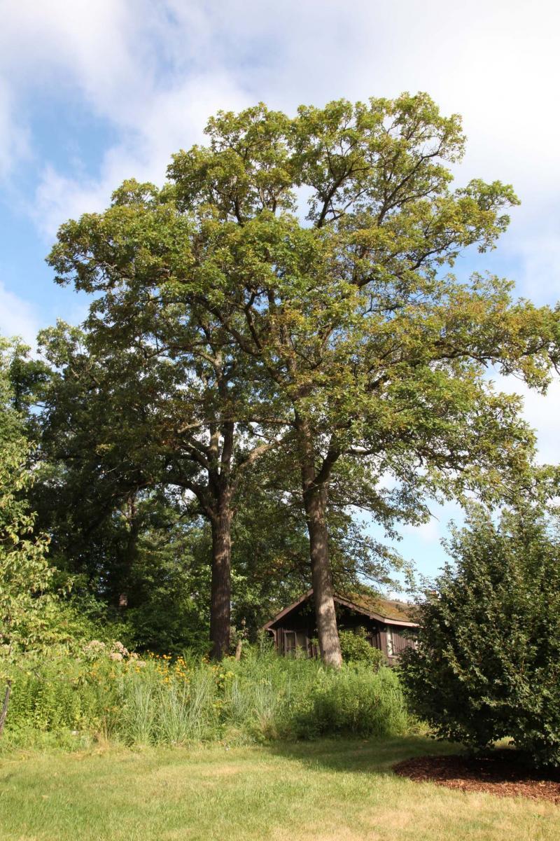 manitobans write the book on ideal prairie trees winnipeg free