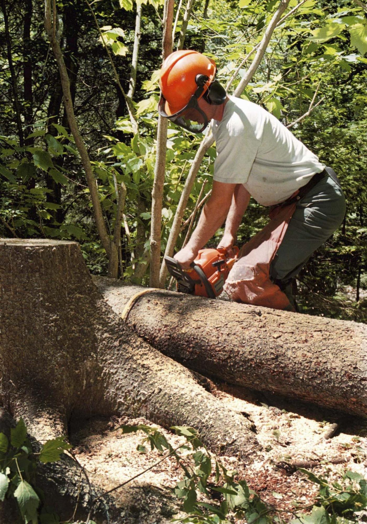<p>Peter Parsons / Halifax Chronical-Herald files</p><p>A certified arborist will have the right equipment and the knowledge to maintain or even remove trees in a safe and timely manner. </p>