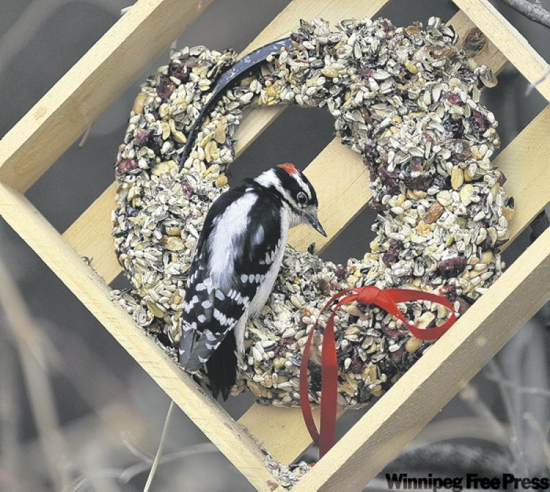 Attract the birds, not the bugs - Winnipeg Free Press Homes