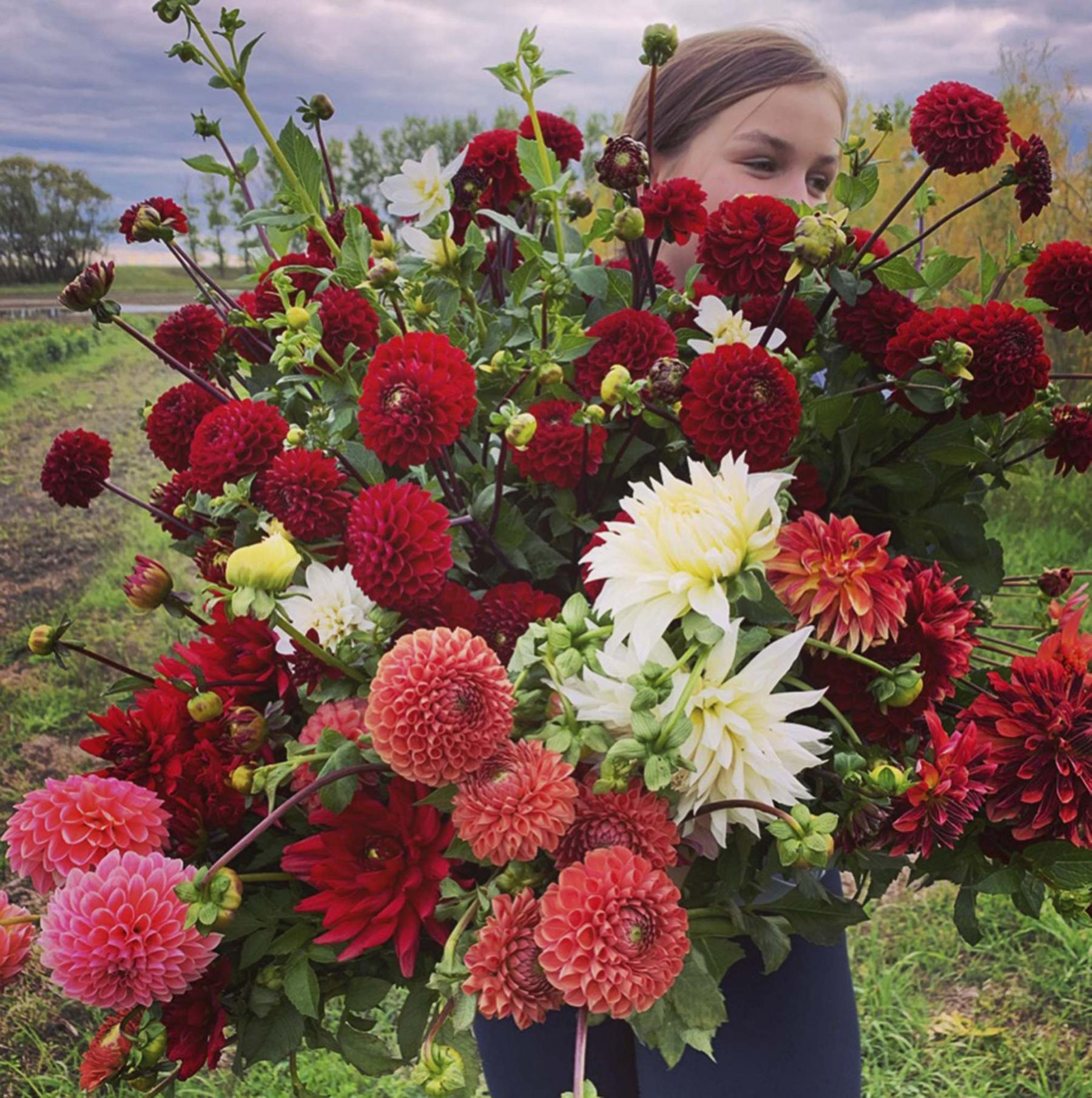 <p>Prairie Grove Greenhouse</p><p>Prairie Grove Greenhouse is Manitoba's newest dahlia farm, producing armfuls of cut-flower dahlias.</p></p></p>