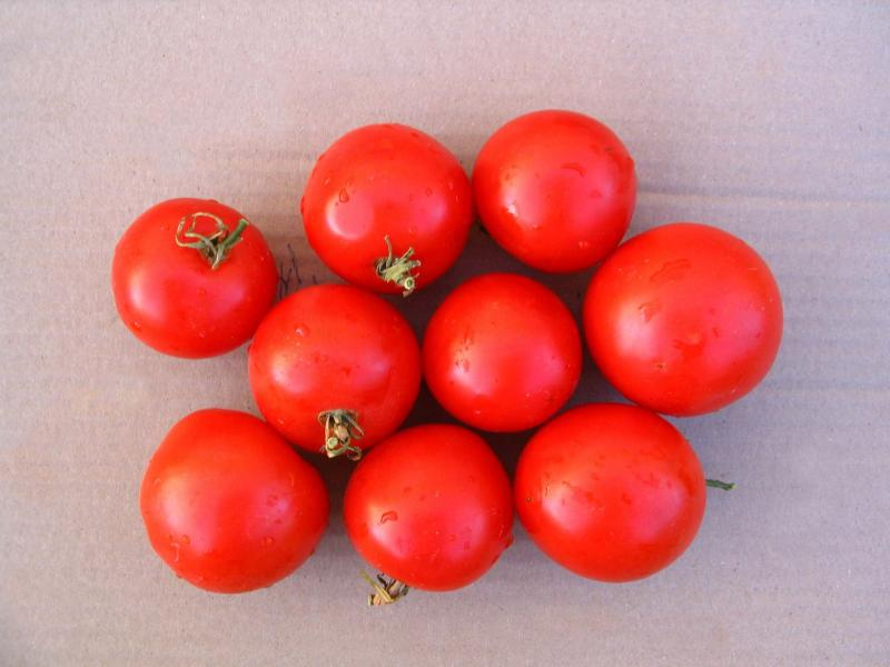 <p>Mandy Botincan</p><p>Victor tomato is a heritage variety that would be lost if not for seed savers.</p>