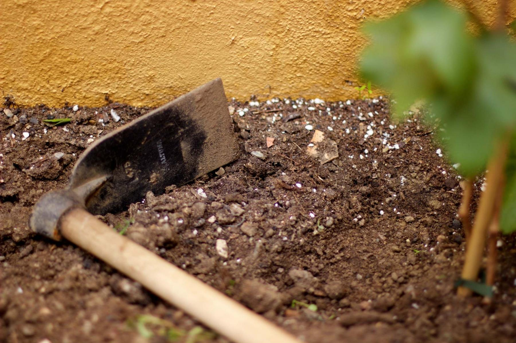 <p>Cultivate a new mindset: limit disturbance to your soil with less tilling and hoeing.</p></p></p>