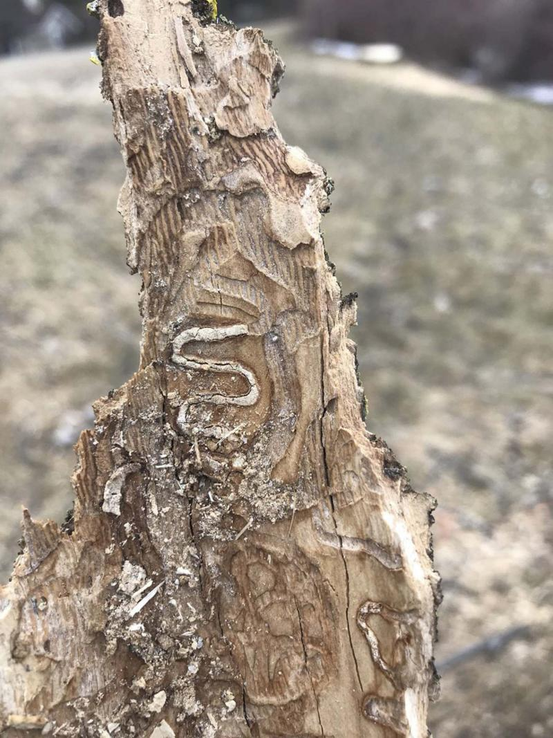 Seeing the urban forest for the trees - Winnipeg Free Press