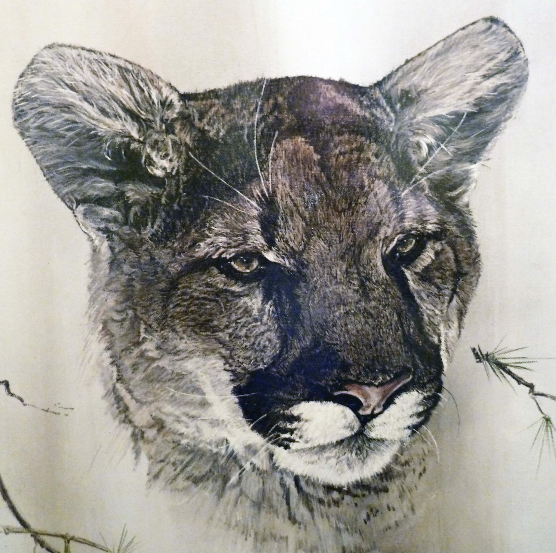 <p>Meow. This beautiful cougar was painted by renowned wildlife artist Phil Prentice. </p>