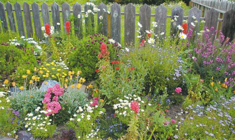Gardening Perennial Joy Winnipeg Free Press Homes