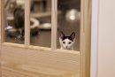 A kitten peeks ...
