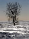 A lone tree in ...