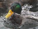 Chilly Bath – ...