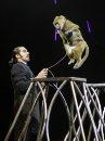 A baboon jumps ...