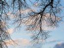 Spring Buds- ...