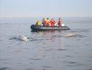 Beluga whales ...