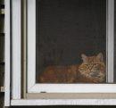 Sitting kitty. ...