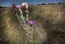 A grassland ...