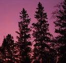 Stdup - Red ...