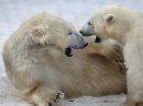 The polar ...
