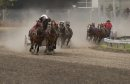 The pony chuck wagon racers come in to finish at the Morris Stampede on Thursday. Sarah Taylor / Winnipeg Free Press July 17, 2014