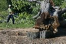 Tree cutter  ...