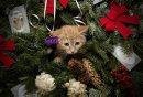 December 2, ...