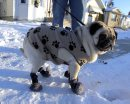 WHAT THE PUG ...