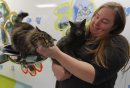 LOCAL - CATS - ...