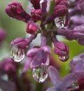 Rainy Day- ...