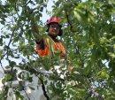 Arborist ...