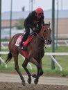 Jockey Chavion ...