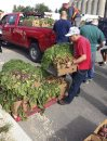 Vegetables ...