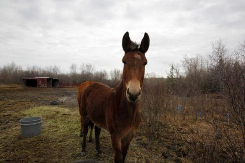 WHO: Karin Schlaikjar, originally from Denmark. WHY: Karin is just one of those unforgettable characters, so personable, rescues wildlife. Should shoot her and her Molly the Mule, very affectionate mule she gave a home to in her backyard. March 29, 2012  BORIS MINKEVICH / WINNIPEG FREE PRESS