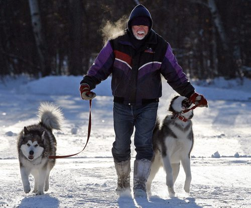 Stdup Weather – Dog Heaven  , Mike Ivey walks his two Alaskan Malamute dogs left Norah and right Tuk  on a brisk -14 degree walk at Assiniboine Park Zoo parking lot , the dogs love the cold and  Tuk  was trying playing  with Ivey's glove .Nov. 21 2013 / KEN GIGLIOTTI / WINNIPEG FREE PRESS