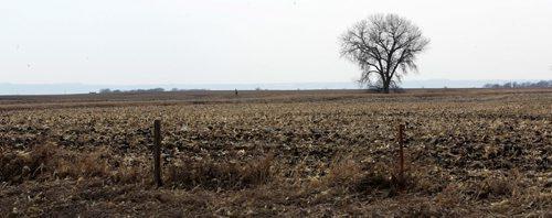 A lone tree soaks up the spring sun north of Sioux Falls, South Dakota - See Randy Turner find spring story- March 26, 2014   (JOE BRYKSA / WINNIPEG FREE PRESS)