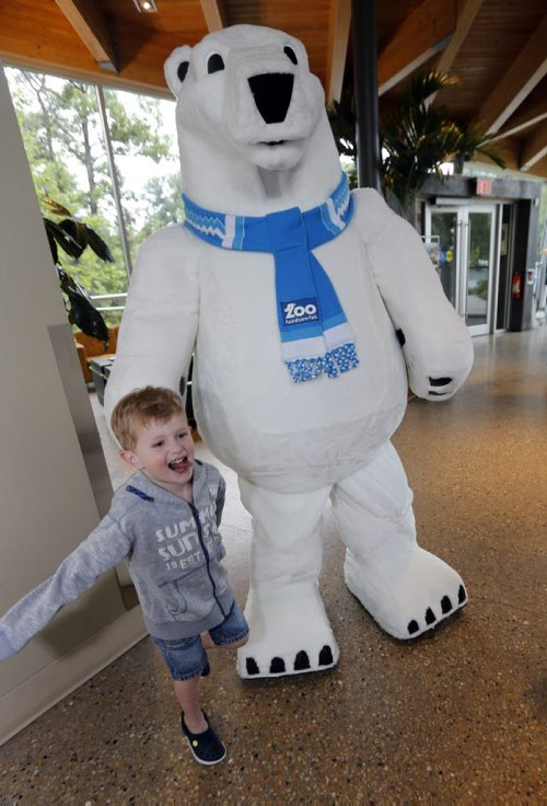 Stdup Zoo Mascot unveiled to the public . The Assiniboine Park Conservancy  , Journey to Churchill 's new mascot Winston made his first public appearance at the Qualico Family Centre just before noon Monday. Zachery Gillespie age 4 got the first hug from the polar bear mascot .The JtoC  is set to open Thurday  June 30 2014 / KEN GIGLIOTTI / WINNIPEG FREE PRESS