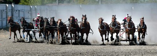 """PHIL HOSSACK / WINNIPEG FREE PRESS 030717 Holy Thundering Hooves Batman......Three four horse teams race neck and neck to the finish line in Morris yesterday. left to right Tom Scarrow, Ray Taplin and Elgin Bell urged their """"Suicide Ben Hur"""" teams toward the finish line at the Manitoba Stampede......See Cheryl's tale."""