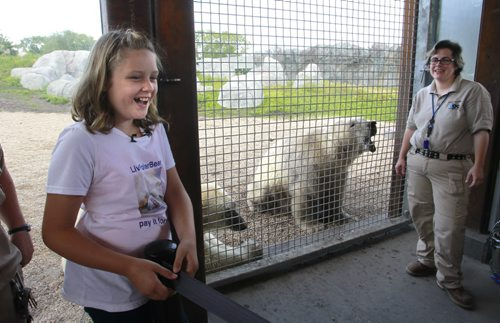 Olivia Clement,11, from the Ottawa area who has raised over $12,000 for polar bear conservation (donation to the World Wildlife Fund) got an opportunity to take part in the positive reinforcement training of the polar bears Storm and Hudson with bear keepers Jesse Kindzierski at the Assiniboine Park Zoo. Olivia is concerned about the effects of global warming on polar bears so she  began crafting and selling hand-made polar bear figurines and launched the LivPolarBear website. The Assiniboine Park Conservancy hosted the visit for Olivia's first time to see live polar bears. Olivia will be back at the Zoo from 11:00 am to 1:00 pm on Saturday,  to sell her hand-made polar bear figurines outside the Tundra Grill in Journey to Churchill with proceeds to be donated to the Assiniboine Park Zoo.   see release Wayne Glowacki / Winnipeg Free Press July 25  2014