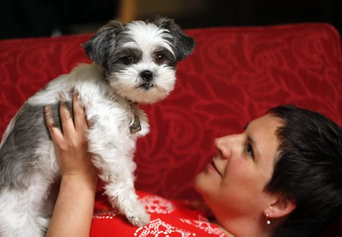 49.8 - humanizing pets SUBJECT: owner Liz Hover and Sadie the dog  STORY: One of my subjects for the 49.8 story on pet parenting/humanization, to run Aug. 23. Sadie is an adorable Shih Tzu (who has 8,200 Instagram followers) and Liz is her mom. Looking for portrait shots of them together/maybe Sadie 'action' shots.  Aug 15 2014 / KEN GIGLIOTTI / WINNIPEG FREE PRESS