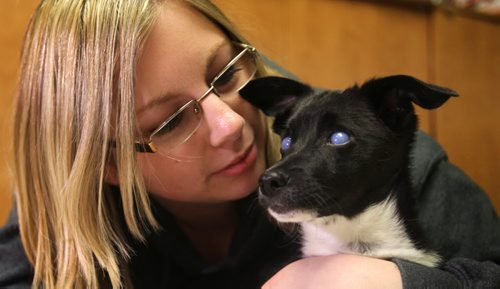 Manitoba Underdogs Rescue Executive director Jessica Hansen, cuddles with Percy, a 6-month-old Border Collie/Jack Russell Terrier cross, who suffered extreme abuse at the hands of his owners when a child deliberately rubbed hair dye in his eyes which may cause permanent blindness.  He has been surrendered to Manitoba Underdogs Rescue and is undergoing treatments to try and save his eyes. See Ashley Prest story.  Feb 11, 2015 Ruth Bonneville / Winnipeg Free Press