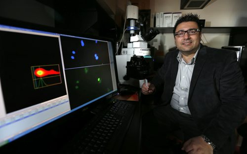 WAYNE GLOWACKI / WINNIPEG FREE PRESS    Ent. Dr. Sachin Katyal, senior research scientist at the Research Institute in Oncology and Hematology at CancerCare Manitoba. On the screen at left are images of brain tumour cells that had undergone irradiation to induce DNA damage. He is researching the cause of pediatric brain cancer, specifically DNA damage and how to repair it to stop tumours.   Joel Schlesinger story   March 31 2016