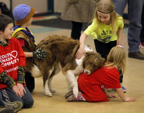 BORIS MINKEVICH / WINNIPEG FREE PRESS LOCAL STDUP - Yume the rescue dog shows some love to some some Scouts attending the event. There was a dog show put on by Hull's Haven Border Collie Rescue. Girl in red on right is Genevieve Evan,4.  From press release:  Winnipeg Scouts Pamper Rescue Dogs, Creating Food Dispensing Games, Handmade Beds and Treats During Good Turn Week, April 22 – May 1. Scouts Canada is challenging all Canadians to join them in performing a Good Turn as part of a national movement to spread goodwill during Good Turn Week, April 22 – May 1, 2016. A Good Turn doesn't have to be a grand gesture; it can be as simple as helping a neighbour unload their groceries or helping someone who is short of change at the store checkout. Scouts from across Winnipeg are collecting donations of towels, blankets, toys, dog food and other pet supplies for Hull's Haven Border Collie Rescue. The Scouts are also building fun food dispersing games, making handmade dog beds and creating homemade treats for the rescue dogs awaiting new homes.  Photo taken at Transcona Scout Hall. April 28, 2016